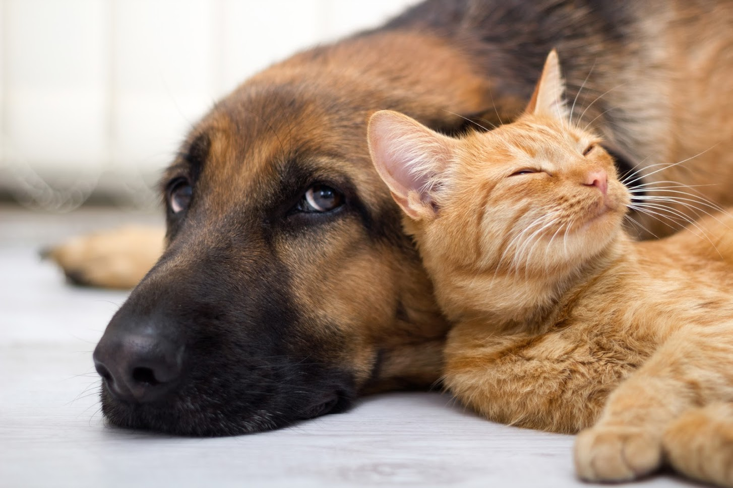 Do's and Don'ts for Storing Your Pet's Supplies